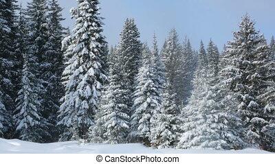 zima krajobraz, las