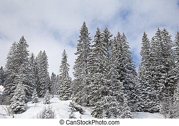 zima krajobraz, w, austriackie alpy