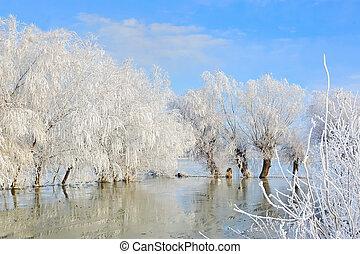 zima krajobraz, z, śnieg nakrył drzewa