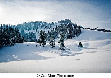 zima krajobraz, z, las