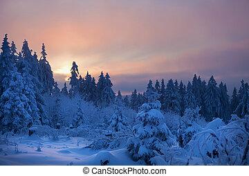 zima, las, w, góry