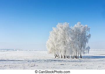 zima, mrazivý, sněžný, den, kopyto, jasný, bojiště, studený