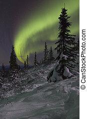 zima, noc, landscapewith, świerk