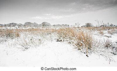 zima, okolica, scena