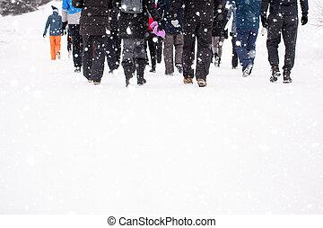 zima, překrásný, skrz, chůze, krajina, skupina, národ, mládě