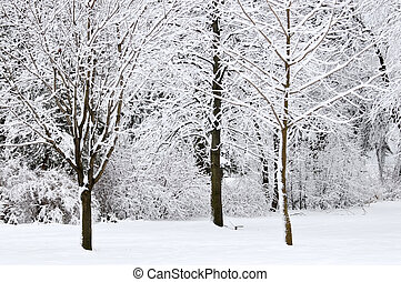 zima, park, krajobraz