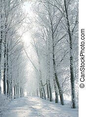 zima, rolna droga, na, świt