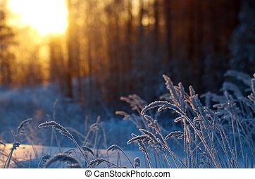 zima scena