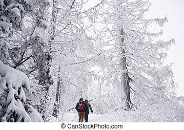 zima, vyhrnout se pojit, les, pokrytý, sněžit, skrz