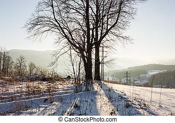 zima, zachód słońca, krajobraz, z, przedimek określony przed rzeczownikami, mroźny, zima drzewa, i, sunlight., zima krajobraz, scene., zima, rolny krajobraz, w, przeziębienie, zachód słońca
