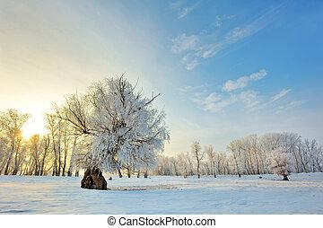 zima, zachód słońca, piękny, drzewa