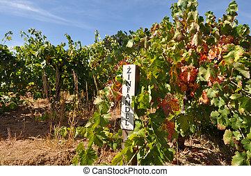Zinfandel Red Wine Sign