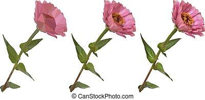 zinnia, ベクトル, 花, poly, 低い
