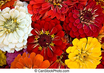 A bouquet of zinnias at the Farmers' Market