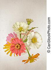 zinnia, fleurs, au-dessus