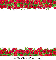 Zinnias flower frame isolated on white background, Red flower blooming with leaf