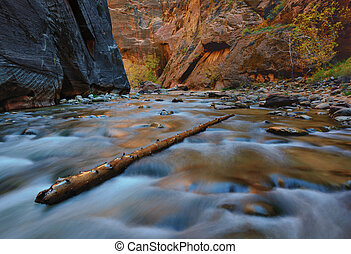 Zion Narrows, Utah - Tree branch standing diognally in the...