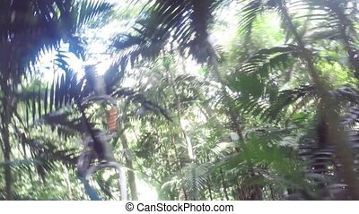 Zip line in tropical jungle forest - Zip lining extreme...