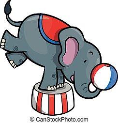 zirkus, abbildung, elefant