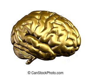 zlatý, mozek