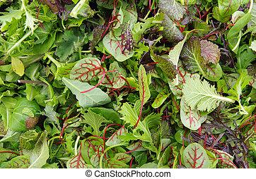 zmieszać, ziele, sałata, pole, surowy, mesclun
