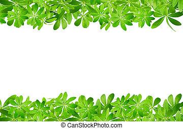 zoet, frame, gemaakt, woodruff, bladeren
