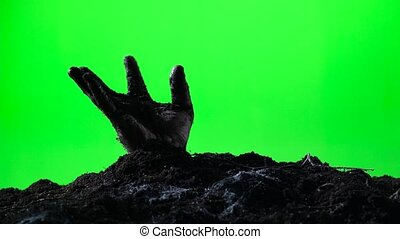 Zombie hand emerging from the ground grave. Halloween concept. Green screen. 008
