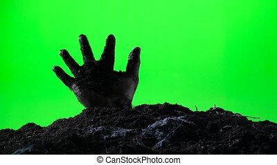 Zombie hand emerging from the ground grave. Halloween concept. Green screen. 009