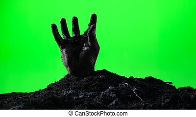 Zombie hand emerging from the ground grave. Halloween concept. Green screen. 010