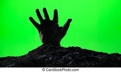 Zombie hand emerging from the ground grave. Halloween concept. Green screen. 012