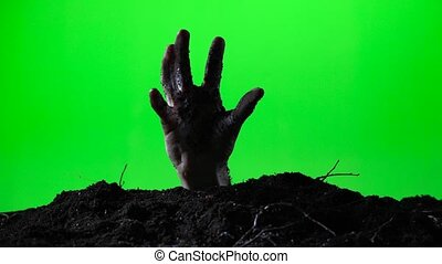 Zombie hand emerging from the ground grave. Halloween concept. Green screen. 015