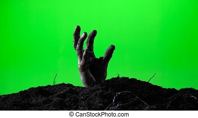 Zombie hand emerging from the ground grave. Halloween concept. Green screen. 016