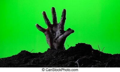 Zombie hand emerging from the ground grave. Halloween concept. Green screen. 017