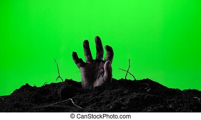 Zombie hand emerging from the ground grave. Halloween concept. Green screen. 018