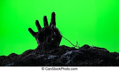 Zombie hand emerging from the ground. Green screen. 007