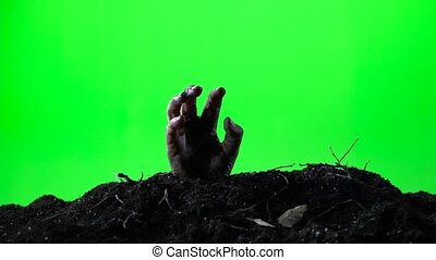 Zombie woman hand emerging from the ground grave. Halloween...