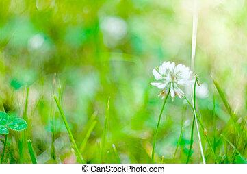 zomer, abstract, natuur, achtergrond, met, gras, in, de, weide