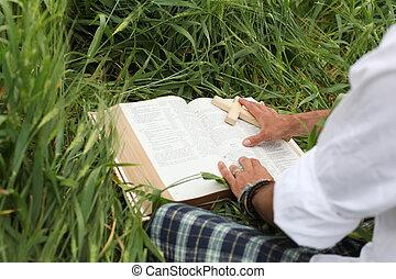 zomer, bijbel, lezende , man