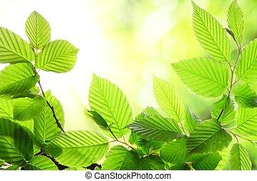 zomer, blad, groene