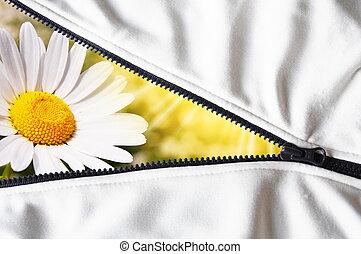 zomer, bloem