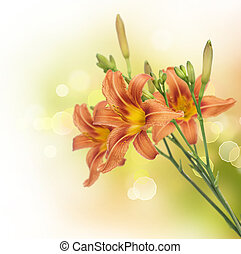 zomer, bloemen, grens, lelie, design.