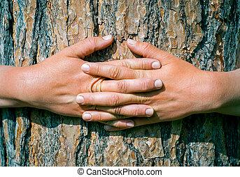 zomer, boompje, handen, park, het koesteren, romp
