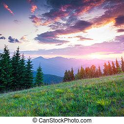 zomer, carpathian, ondergaande zon , kleurrijke bergen
