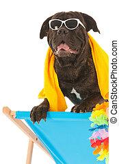 zomer, dog