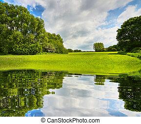 zomer, ecologie, landscape