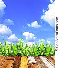 zomer, gras, en, oud, van hout grondslagen