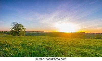 zomer, landscape, met, een, ondergaande zon , pan