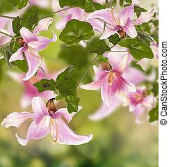 zomer, natuur, bloemen, achtergrond