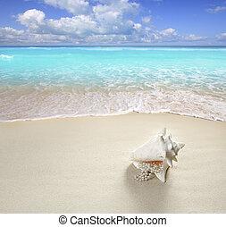 zomer, schaal, vakantie, parel, zand, halssnoer, strand