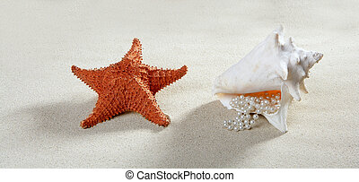 zomer, schaal, zeester, parel, zand, halssnoer, strand